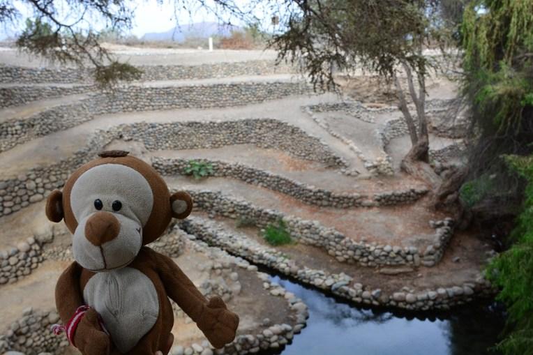 Mucuvinha no aqueduto de Occongalla, em Nasca
