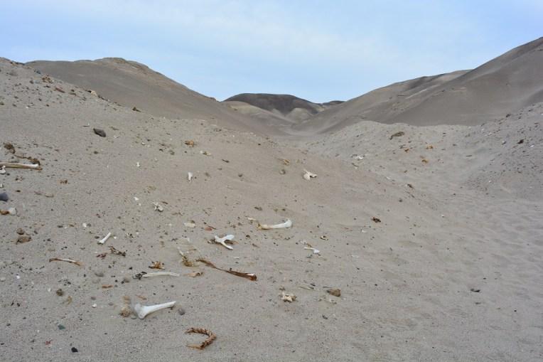 Ossadas de uma civilização de 2 mil anos espalhadas pelo deserto