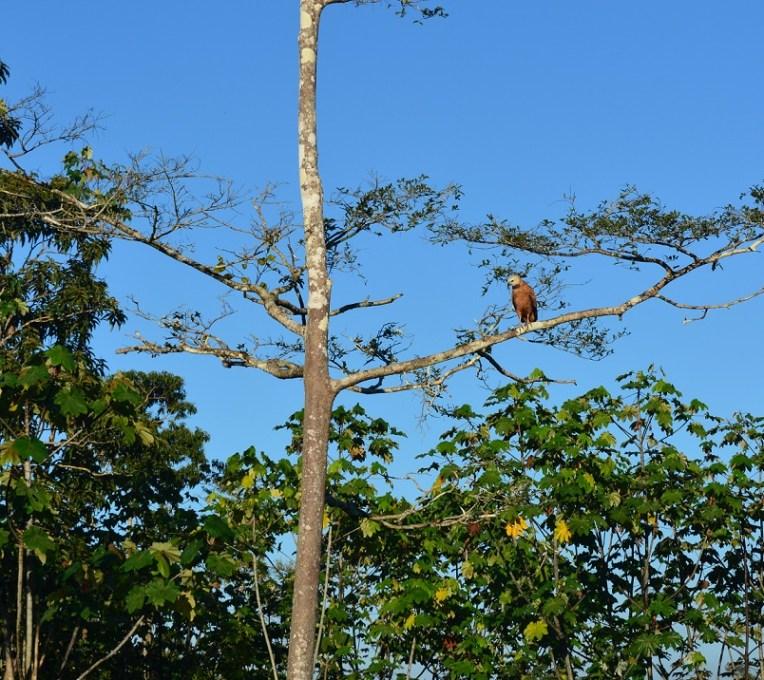 Observação de pássaros pode ser um ótimo passatempo na selva