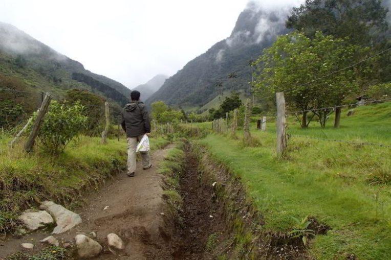 Caminhando pelo Valle de Cocora