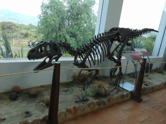 Museu Paleontológico de Villa de Leyva.