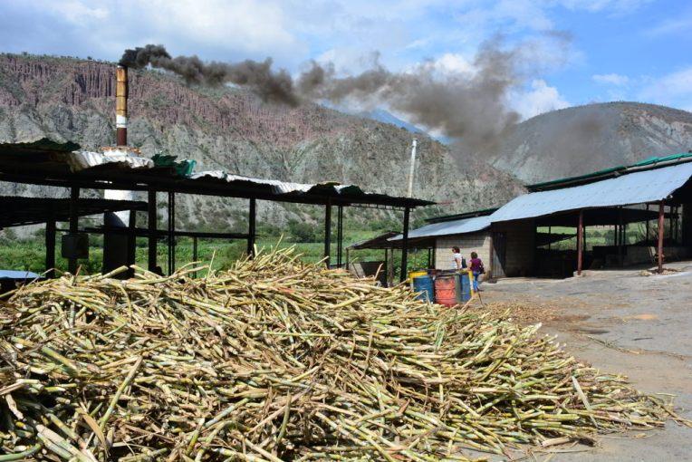 Cultivo de cana-de-açúcar em Mérida, Venezuela