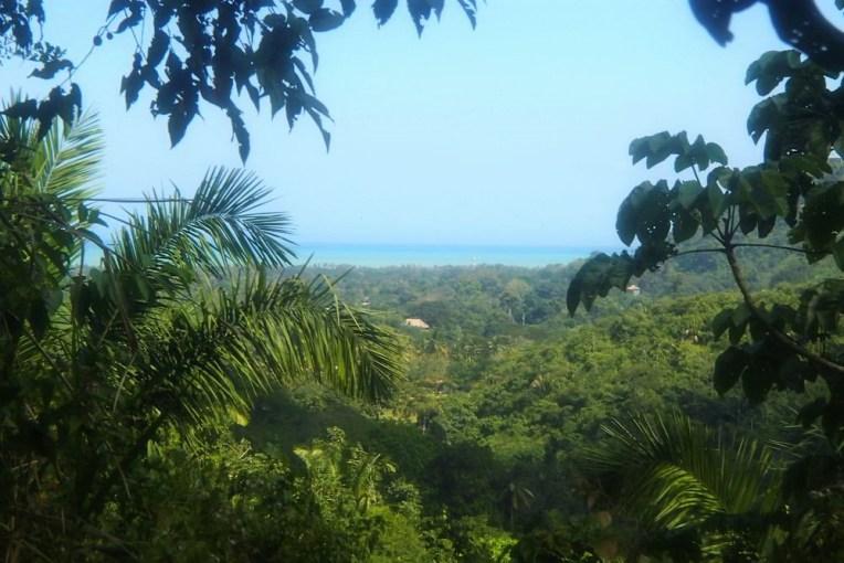 Selva e o mar na região de Palomino
