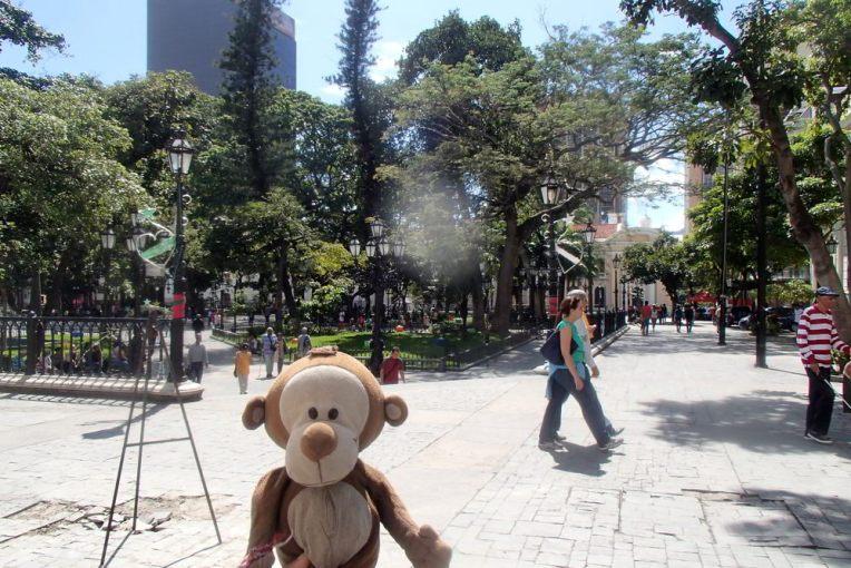 Mucuvinha no centro de Caracas