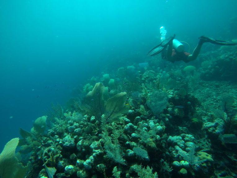 Mergulhando em Utila