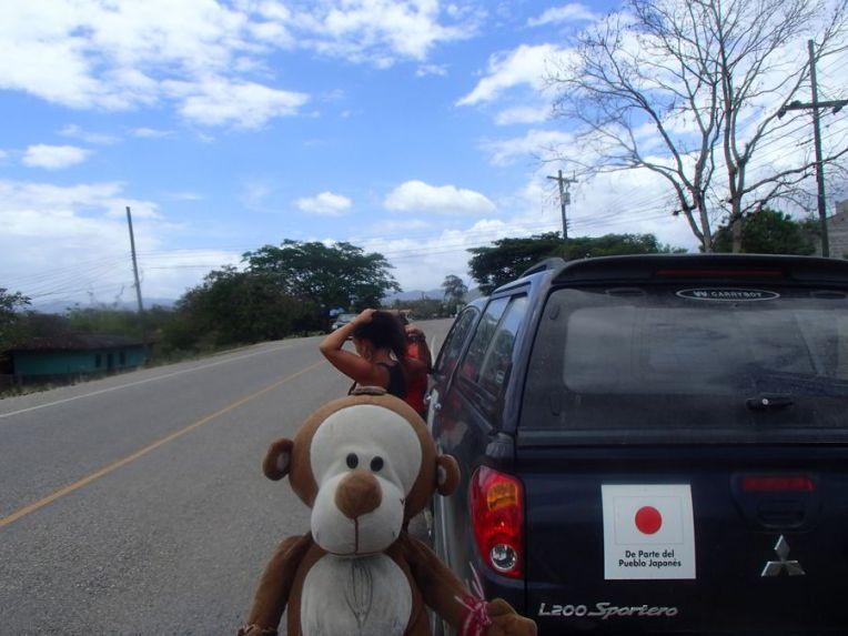 Mucuvinha de carona em Honduras