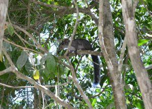 Esquilo que vimos no caminho para Dos Ojos