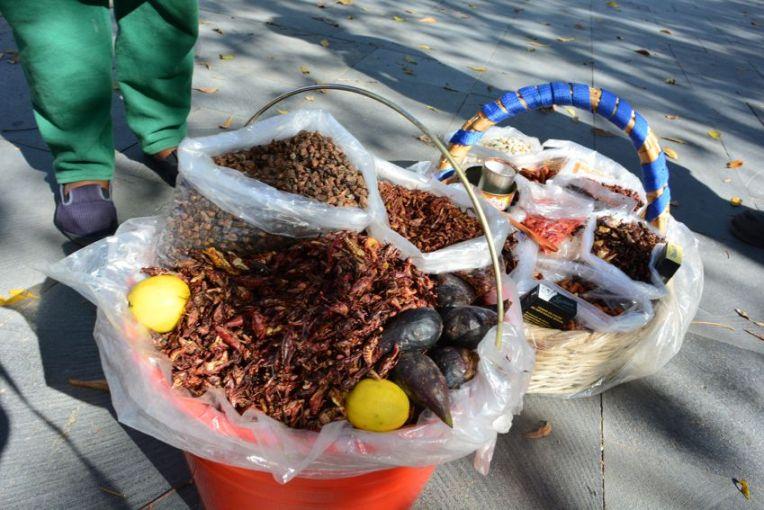 Chapulines - gafanhotos fritos. Comida típica da região