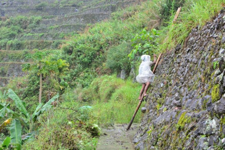 Plantações de arroz de Batad