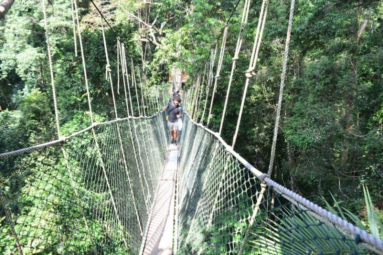 Reserva Natural Taman Negara