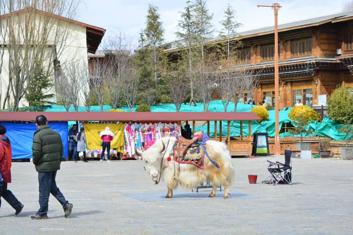 Um yak em Shangri-la
