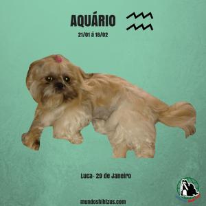 Luca aquario