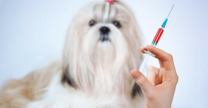 Importância dos exames hemograma e bioquímico nos pequenos animais.