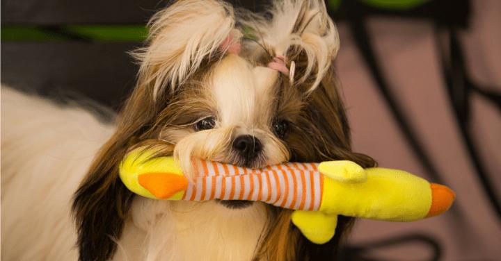 Como ter um cachorro calmo