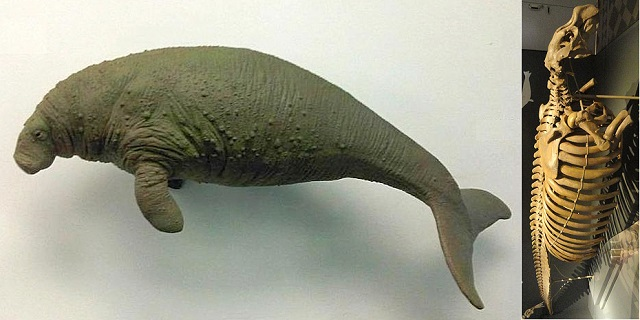 Top 10 animais incríveis que já foram extintos - Vaca-Marinha-de-Steller
