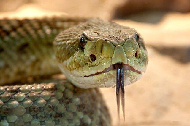 Cobras usadas como armas de guerra