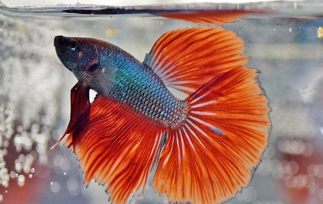 Sim, alguns peixes podem morrer afogados