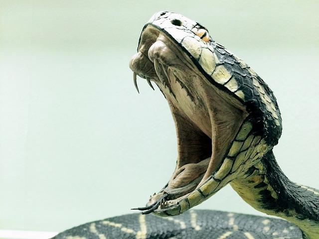 Todas as cobras possuem toxinas