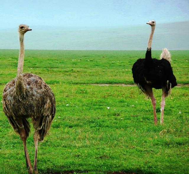 Aves extremamente velozes