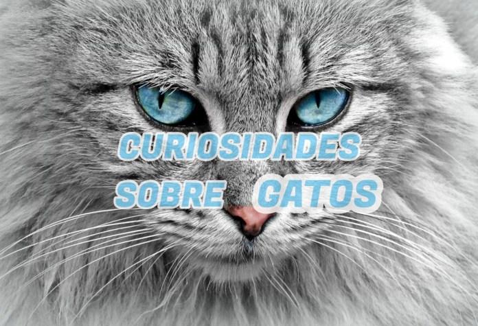 Top 10 curiosidades sobre Gatos