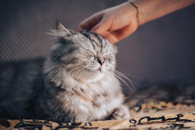 Possível utilidade do ronronar dos gatos
