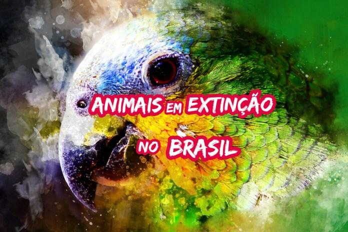 Top 10 animais em extinção no Brasil que em breve podem desaparecer