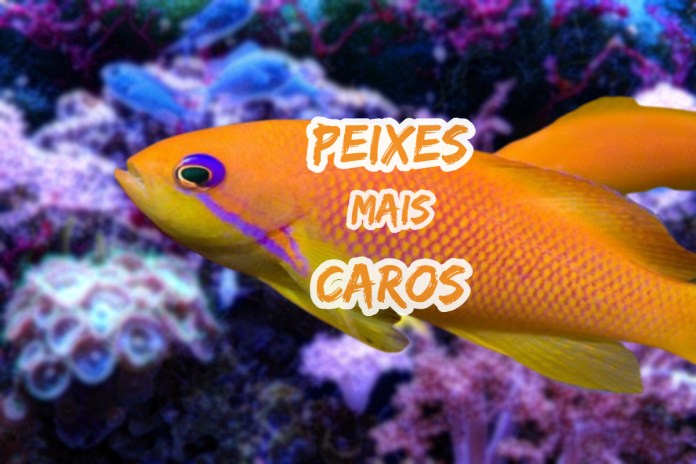 Top 10 peixes mais caros do mundo