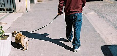 walking-dog-in-afternoon.jpg