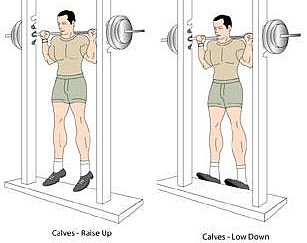 barbell-standing-calves-raise.jpg