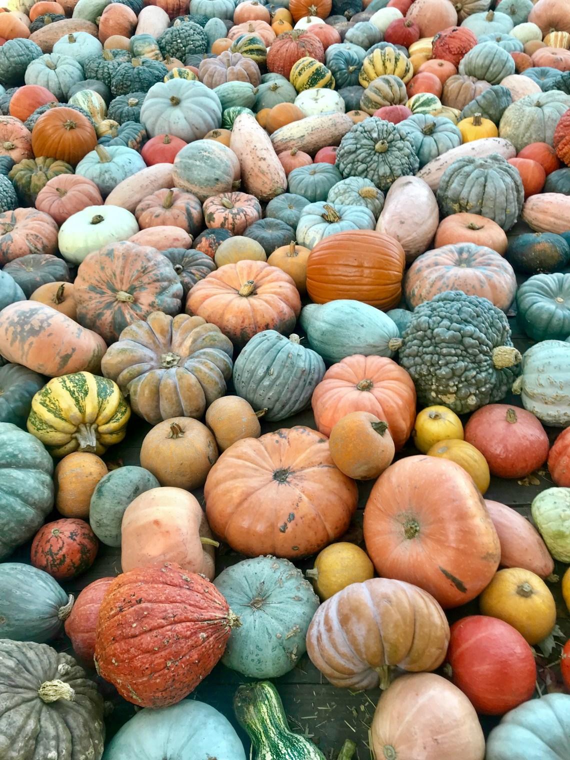 Ludwigsburg Pumpkin Festival_0277