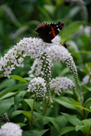 Butterfly in gardens