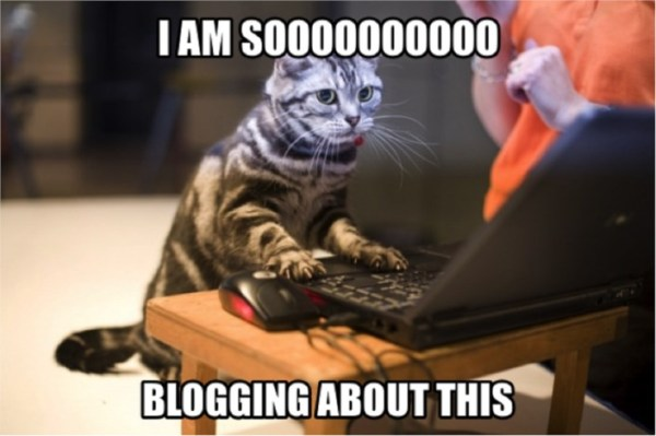 Image result for blogging meme