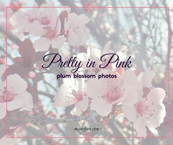 Pretty in Pink - Plum Blossoms