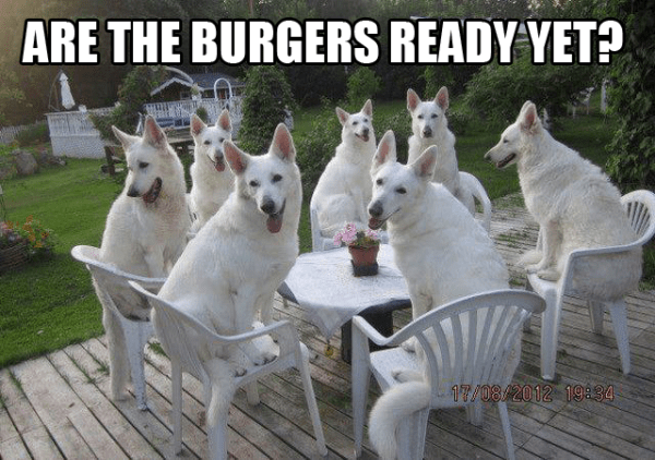 Are-the-burgers-ready-yet-dog-meme