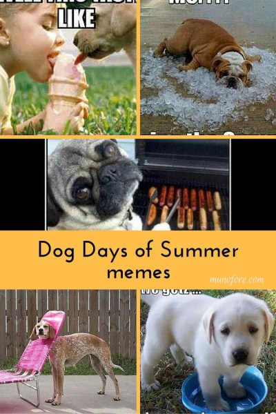 Dog Days of Summer Memes - collection of cute and funny summer themed dog memes. Dog memes. Funny Summer memes.