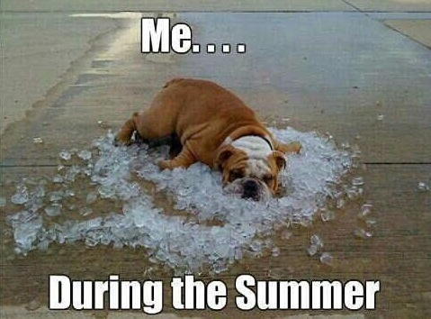 Funny Meme Pictures Of Dogs : Dog days of summer memes plus friday frivolity munofore