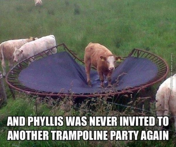 funny-pics-cow-at-a-trampoline-party