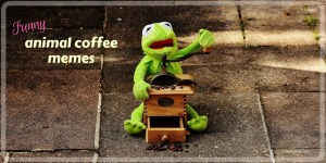 Adorable and funny animal coffee memes - memes about coffee featuring animals. coffee memes, animal memes.