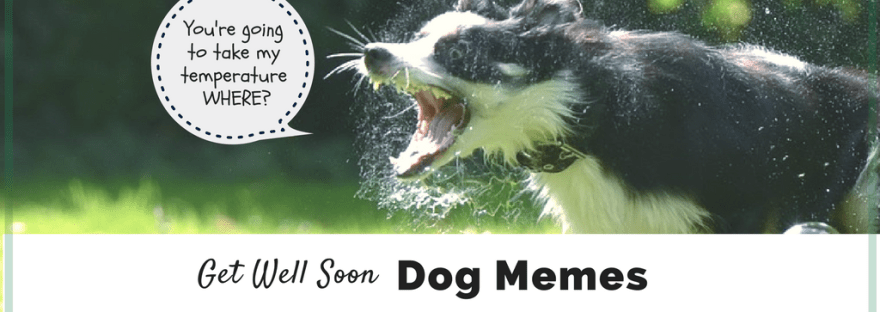 Cute Get Well Soon Dog Memes to help you feel better when you are sick. Cute puppy memes. Funny sick puppy memes.