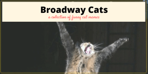 Broadway Cats Memes - a collection of broadway memes with cats.