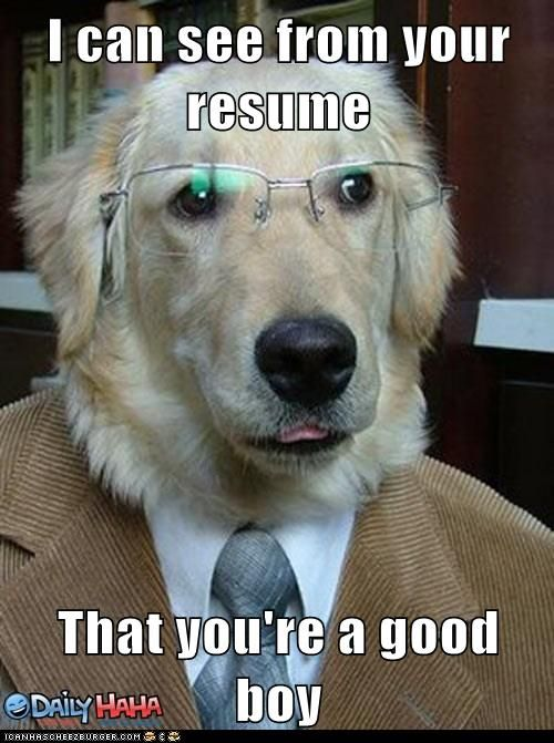 8943898896060974de8ab7075eb8f410?resize=447%2C600 dogs at work memes fridayfrivolity munofore