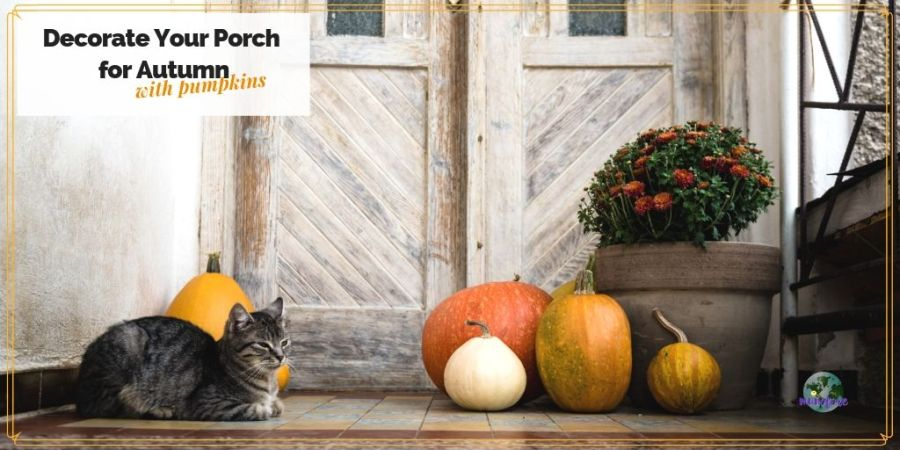 "cat and pumpkins on a porch with text overlay ""Decorate Your POrch for Autumn with pumpkins"""