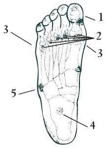 Figura planta del pie