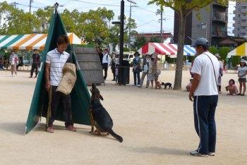 警察犬訓練の様子