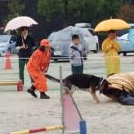 災害救助犬の実演
