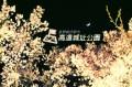 高遠城お花見旅ブログ/天下の紅桜たちのワンマンライブステージ!