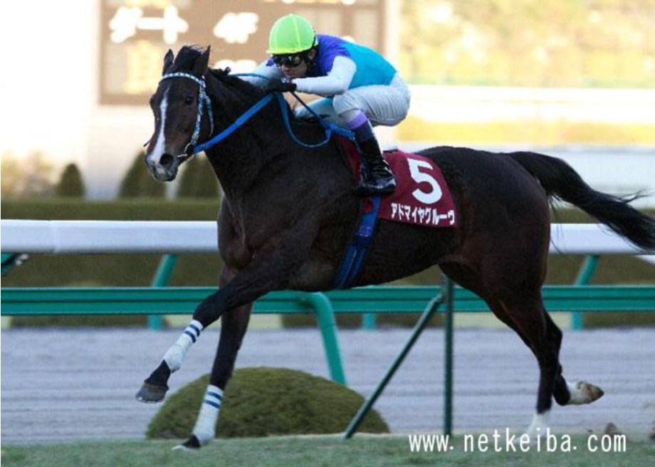 阪神牝馬Sのアドマイヤグルーヴ(netkeiba.com)