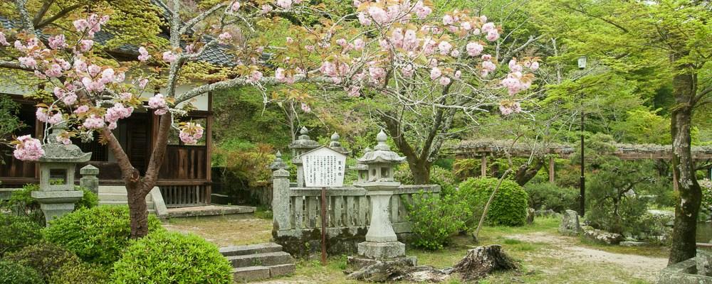 Land of the Rising Sun – Life in Iwakuni