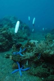 Murex Manado House Reef Buoy Trail