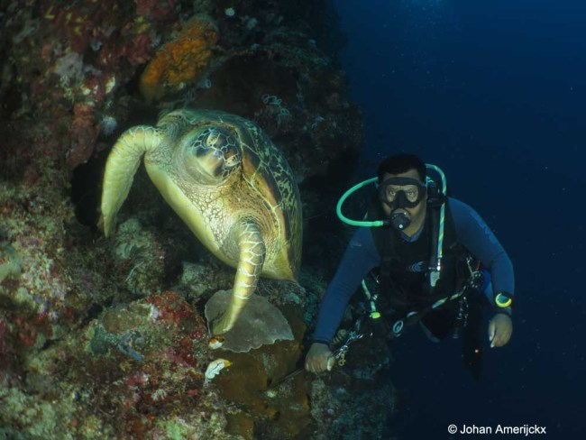 Next to dive guide Basrah is a huge Green Sea Turtle